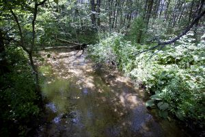 Chaffee Creek Trout Stream