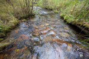 Wisconsin Trout Streams