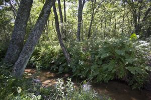 Waushara County Trout Waters